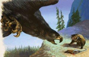 bear_eagle