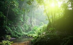 tropiko-dasos-amazonios-pukni-blastisi