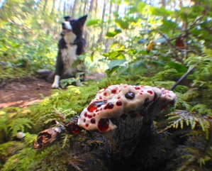 bleeding-tooth-fungus-and-zero-the-dog